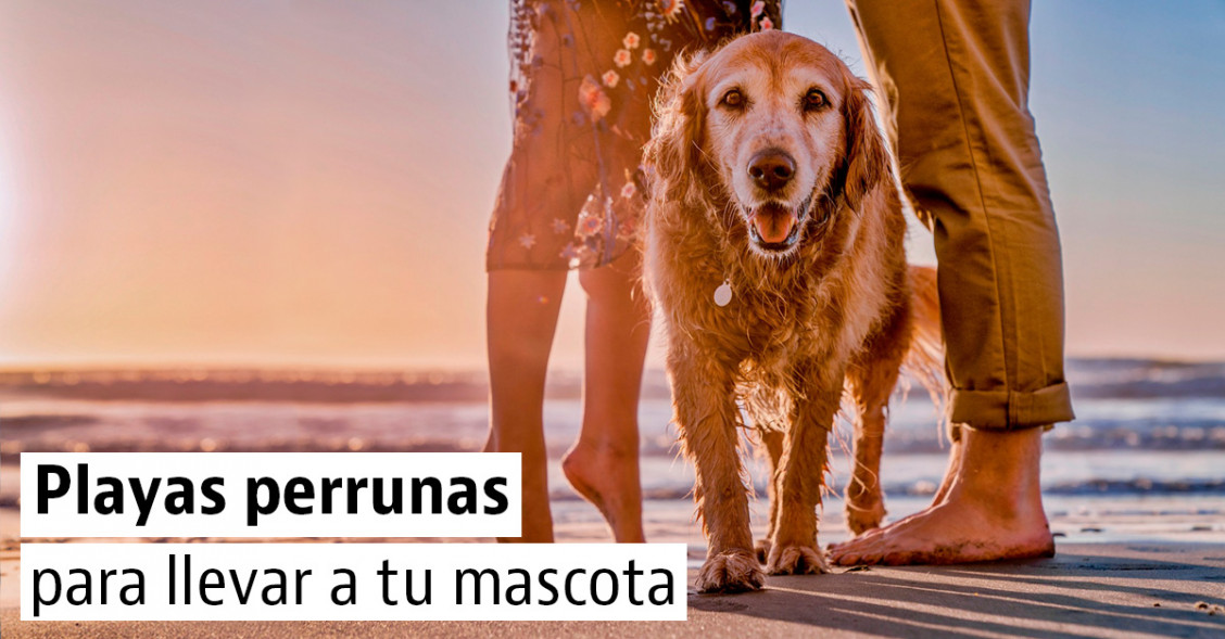 "Las mejores playas ""pet-friendly"" para ir con tu mascota"
