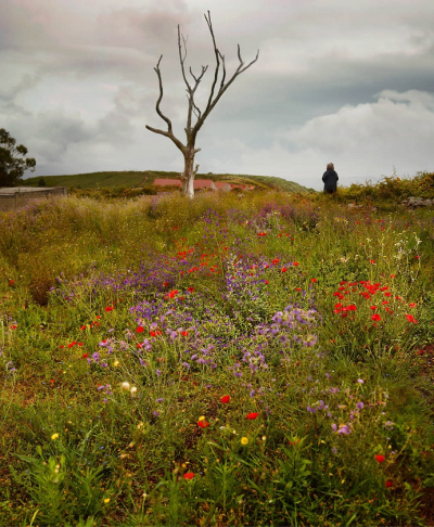 Fotografía de Ellen Kooi por 900 euros +IVA (39 x 34 cm enmarcada)