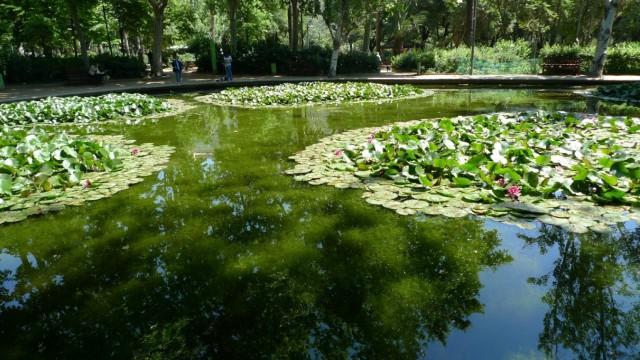 Lago del Turó Park de Barcelona / Ajuntament de Badalona