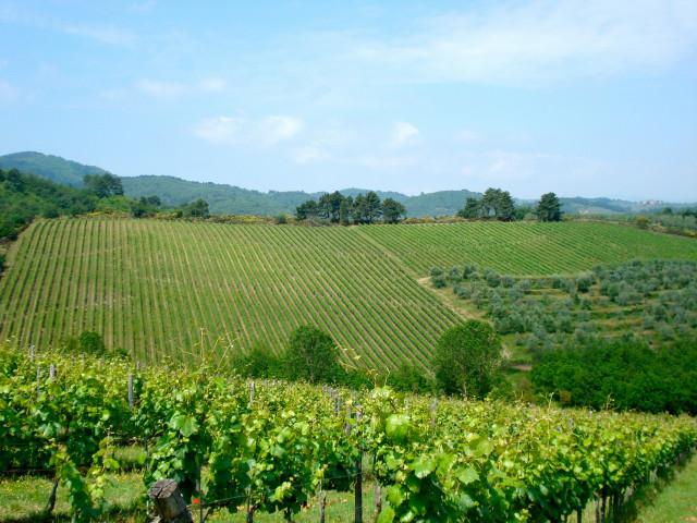 Ruta del Vino Tierras de Arezzo