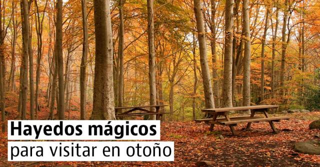 Hayedos mágicos para visitar en otoño