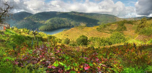 Ruta del Vino de la Ribeira Sacra