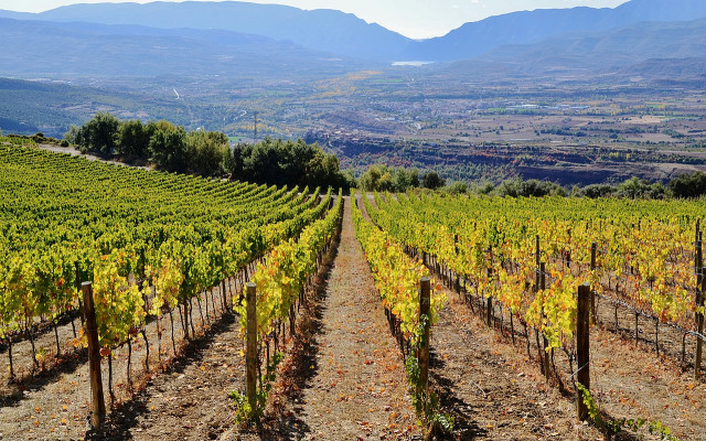 Ruta del Vino de Lleida - Costers del Segre