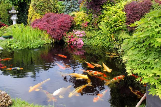 Un estanque con carpas Koi / Rumah123
